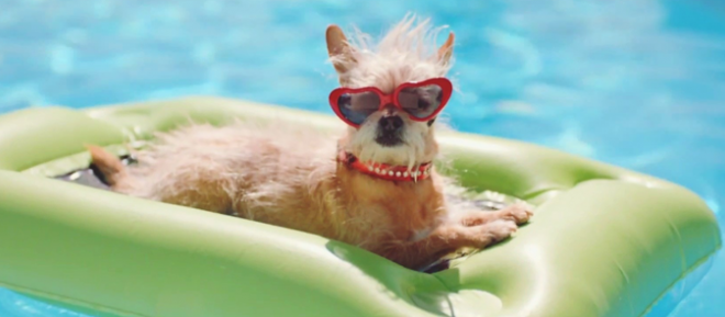 Staying Safe on the Water, Premier Pet Supply